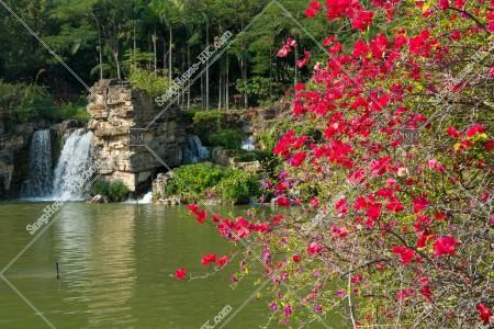 青衣公園 池と花 その①
