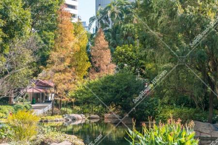 秋の香港公園 池と紅葉した木々 その②