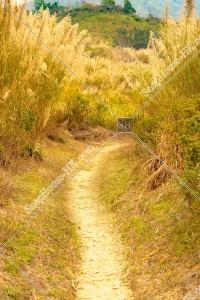 坪洋 草原の風景 その⑤