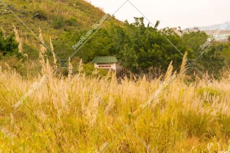 坪洋 草原の風景 その⑦