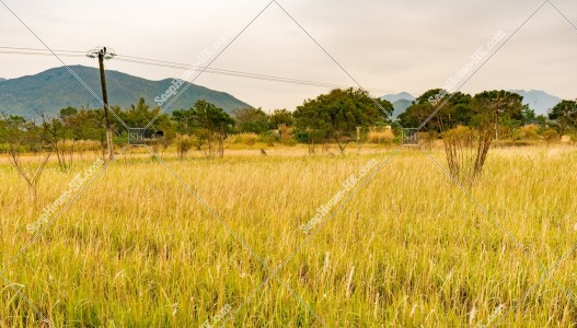 坪洋 草原の風景 その⑭