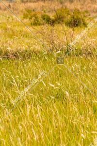 坪洋 草原の風景 その⑰