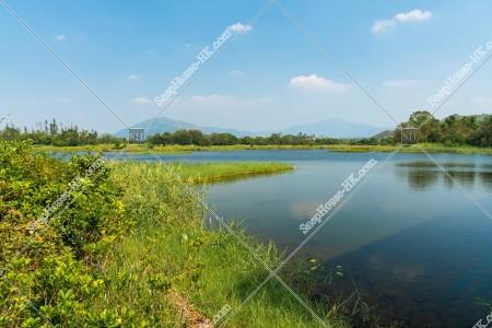 香港濕地公園 湿地 その③