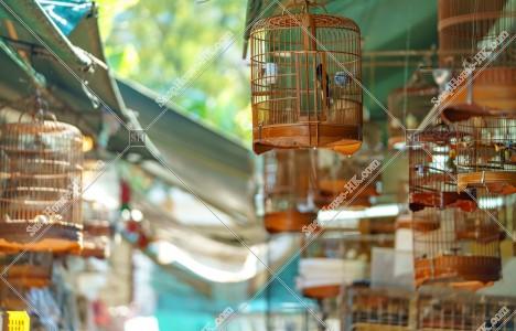 園圃街雀鳥花園(バードガーデン) 鳥かご その③