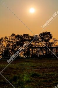 樹木と夕陽